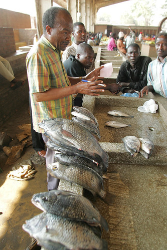 Fish market in Malawi. Photo by Stevie Mann, 2007.
