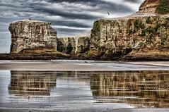 Muriwai Cliffs (MarkMeredith) Tags: newzealand cloud reflection beach weather birds cliffs nz coastline westcoast gannets seabirds muriwai