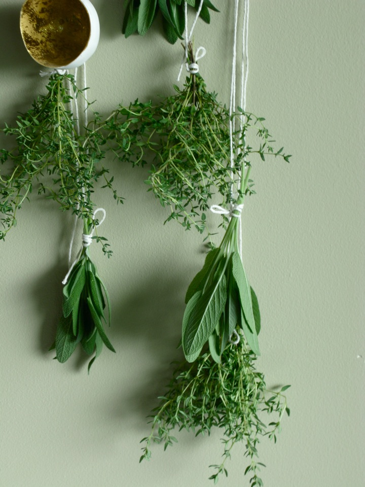 drying herbs sage thyme 009