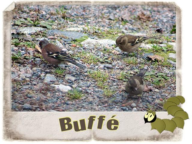 Buffé ( 244 av 365 )