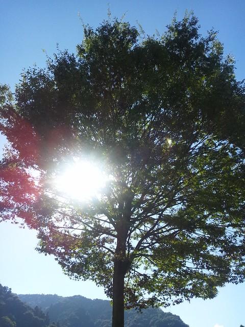 木陰で一休みの写真