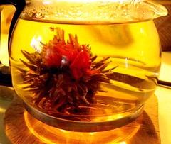 Flower Tea (C r u s a d e r) Tags: greentea chinesetea fugui