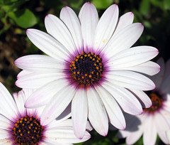 Flowers Unsorted  56
