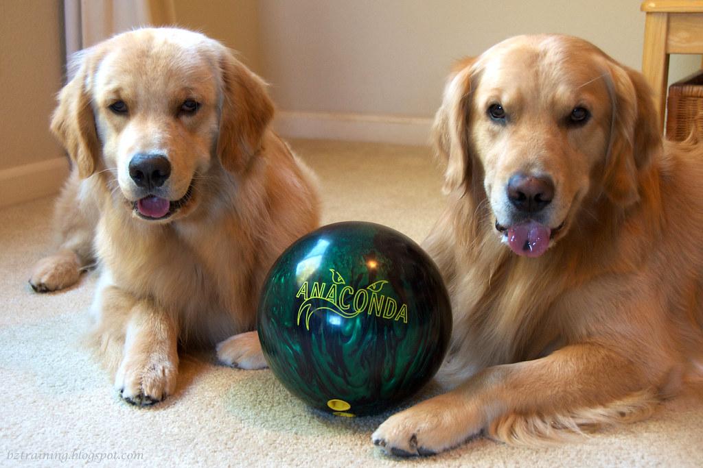 Dog Bowling?