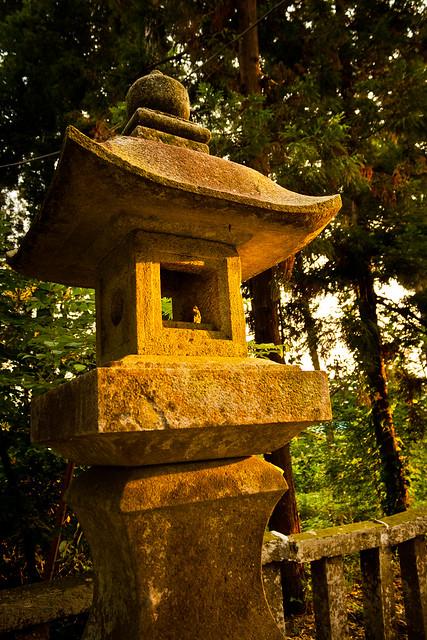 The Giant Trees of Tochigi: #63 The Sacred Cryptomeria of Kumano