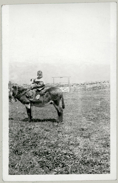 Boy on a horse.
