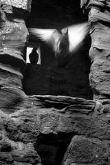 Silhouette of an angel (Christian Hacker) Tags: bw bird castle angel canon scotland flying blackwhite aberdeenshire pigeon pigeons ghost ruin silhoutte flutter castleruin dunnottarcastle canoneos400d
