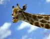 Phoenix Zoo Giraffe (Mark85306) Tags: niceshot mygearandme mygearandmepremium mygearandmebronze mygearandmesilver mygearandmegold gearandmebronze