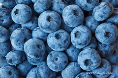 Organic Blueberries from Nova Scotia (laszlofromhalifax) Tags: blue food canada fruit berry novascotia berries harvest blueberry picked getty produce organic halifax blueberries gettyimagescanada