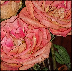 ~ Graphic Blossoms ~ (Denise Purrington {{say hello to my Little Bears:)) Tags: flowers roses grpahic