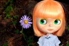 Talking Flower?