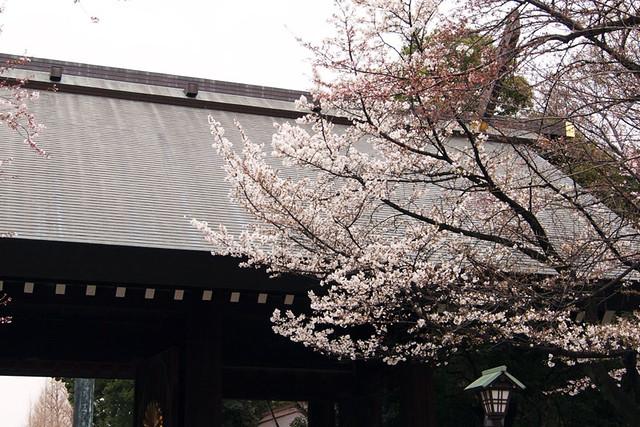 110403_120716_靖国神社