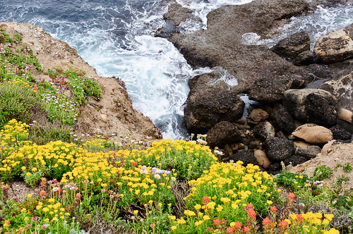 1106-SF&Monterey-3334