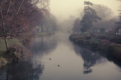 Mist on the Avon river, Hagley Park, Christchurch (Le Fabuleux Destin d'Amlie) Tags: park morning bridge winter newzealand christchurch mist weather fog river pentax ducks peaceful canterbury southpacific getty aotearoa avon forme avonriver hagleypark k7 31mm stwell stsell