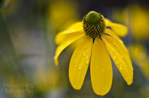 240:365黄色,雨后