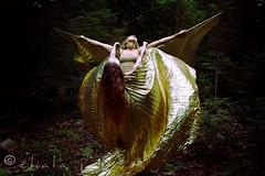 Attemp to Soar (ChalaJan) Tags: fly wings scranton try soar lakescranton hangingon attemp