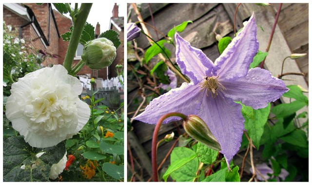 Hollyhock and Clematis