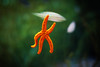 High Five! (mflmartin) Tags: sea orange cute water valencia star little seastar estrellita estrellademar