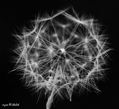 Details.... (mzna al.khaled) Tags: light bw black detail macro beautiful closeup canon focus dof explore arabia natrue 105mm 50d ماكرو macrolife فوكس كلوزاب mzna