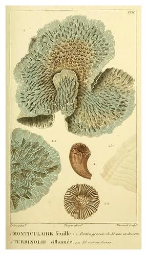 014-Manuel d'actinologie ou de zoophytologie (Volume plates) 1834- H.-M. Ducrotay Blainville