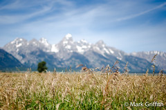 Waves of Grain (Mark Griffith) Tags: hole jackson wyoming tetons grandtetonnationalpark boulderpark philbeauxpark tetonboulderpark 20110813dsc1251