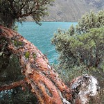 "Laguna Jatuncocha & Red Tree <a style=""margin-left:10px; font-size:0.8em;"" href=""http://www.flickr.com/photos/14315427@N00/6079516271/"" target=""_blank"">@flickr</a>"