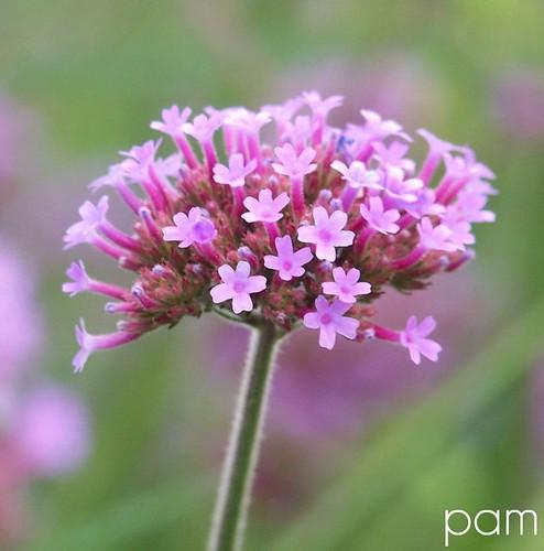 Pam, Summer