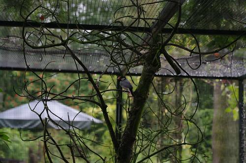 Flickr Rotterdam Meetup: Arboretum