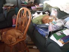 A cat's life 02