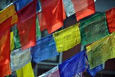 Wind blow chanting (Araleya) Tags: nepal nikon colorful buddhist flag faith religion buddhism believe kathmandu oriental nikkor believing boudhanath multicolor tibetain boudnath araleya enmass d5000 montraflag