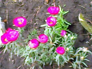 08-02-09mi jardín