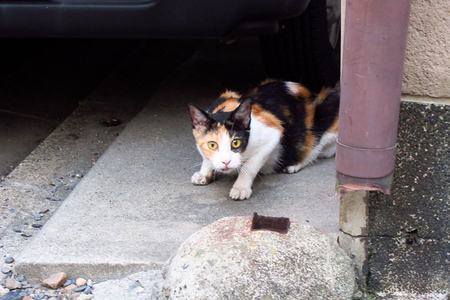 Today's Cat@2011-08-30