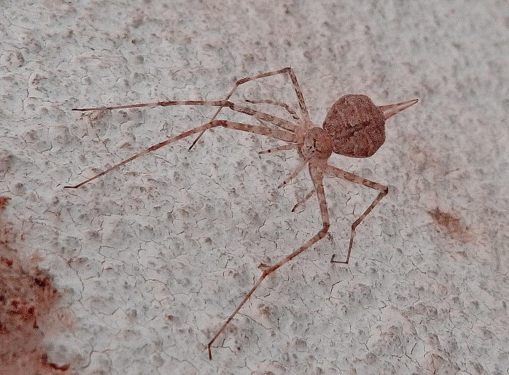 30-08-2011-spider
