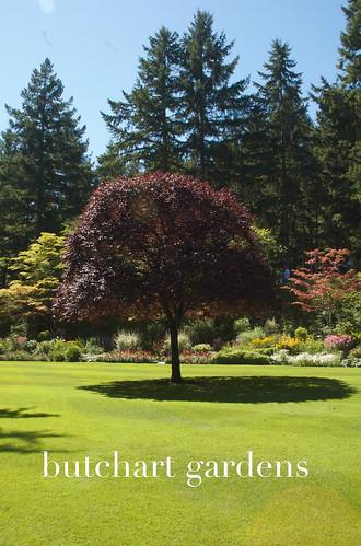 butchart tree