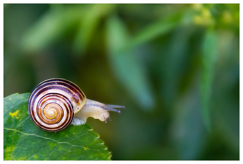 Kleine Schnecke by oli.schulz3, on Flickr