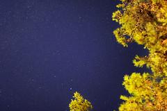 Croatia, Rovinij, Stars (gcasirati) Tags: blue sea summer tree beautiful yellow night canon 50mm lights star croatia sigma august sharp clean galaxy seeing shooting nightsky sanlorenzo standard milkyway altair rovinij fastlens vialattea