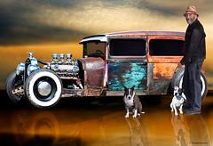 rat_rod (duckforcover) Tags: sky man colour reflection art dogs beauty hat car photoshop australia photomontage hotrod staffordshirebullterrier v8 ratrod cs4 staffys carart d4c duckforcover