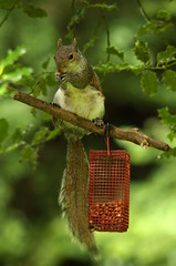 Grey Squirrel (Darren W. Ritson) Tags: wood tree nature grey nikon d70 feeding nikond70 wildlife nuts sigma feed nut squirell thornley thornleywood