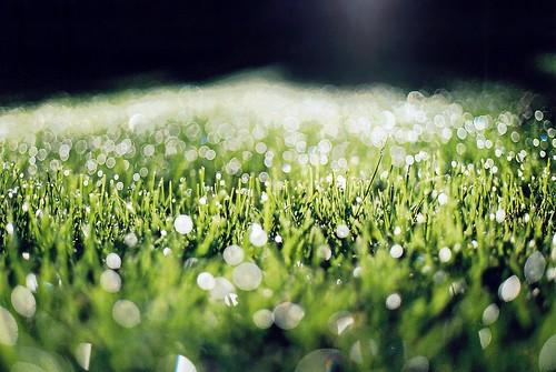 フリー写真素材, 花・植物, 芝生, 雫・水滴,