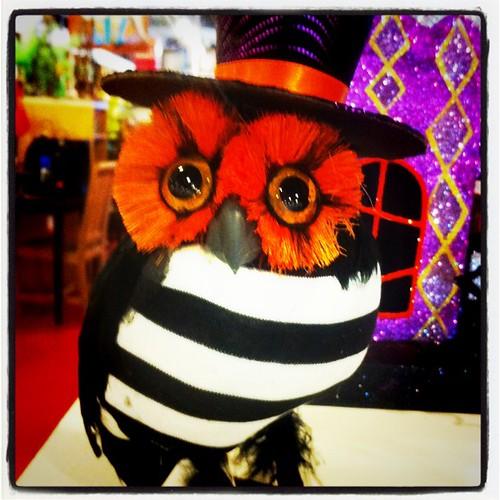halloween store stalking pier 1 imports - Pier One Halloween