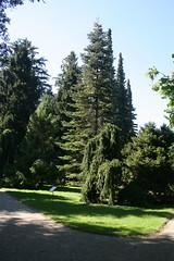 Nadelgehölze - Botanischer Garten