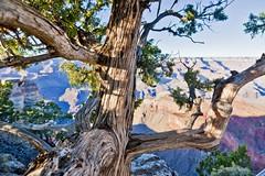 _MG_0299 (m24instudio) Tags: travel arizona travelling nature landscape rocks escape treasure grandcanyon dream grandcayon m24instudio arizonaphotography m24instudiophotography
