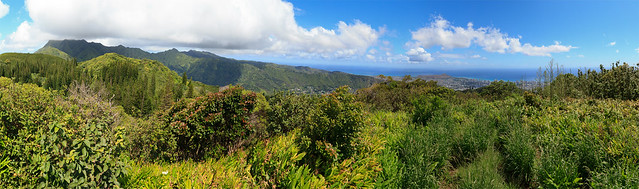 Manoa Cliffs Trail 02