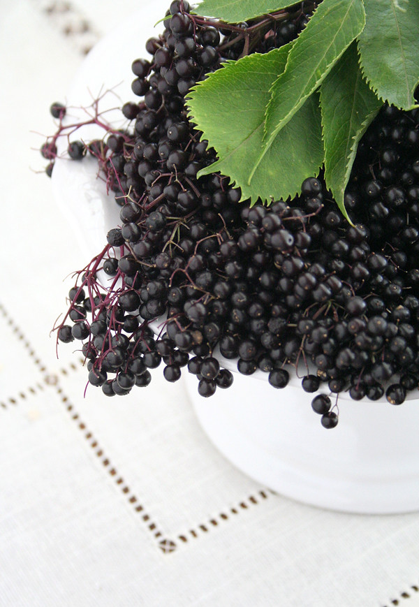 elderberries_2