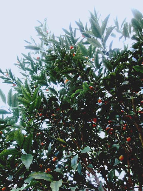 Wendy Whiteley's Secret Garden 6