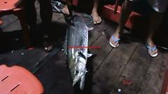 20100811 (fymac@live.com) Tags: mackerel fishing redsnapper shimano pancing angling daiwa tenggiri sarawaktourism sarawakfishing malaysiafishing borneotour malaysiaangling jiggingmaster