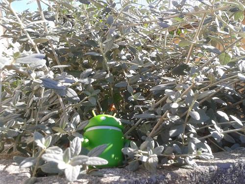 Androidografia Barakaldo 254