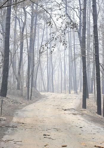 BASTROP FIRE_2011