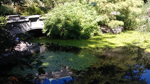 Zoology Pond