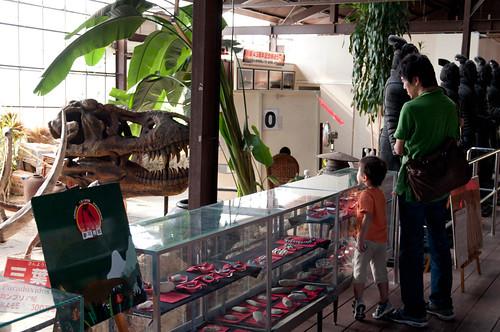 化石ミュージアム